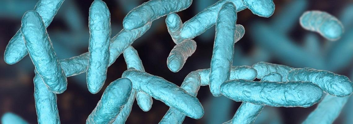 Découvrez les avantages des probiotiques naturels